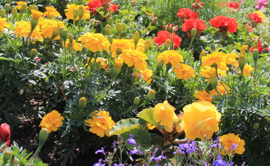 New Milton nominated for Britain in Bloom 2019