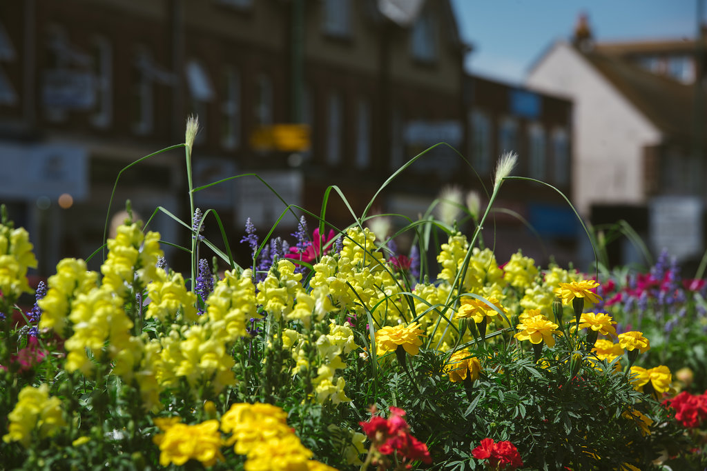 South & South East in Bloom Awards 2018