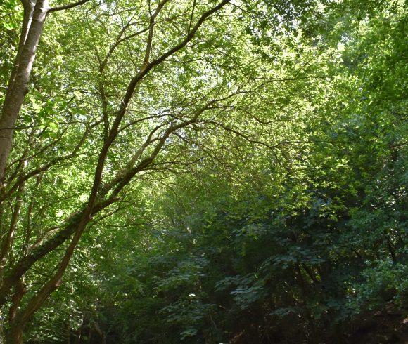 Chewton Bunny Nature Reserve