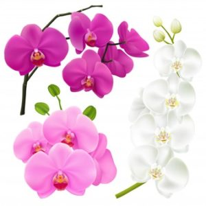 Loveorchids.co.uk